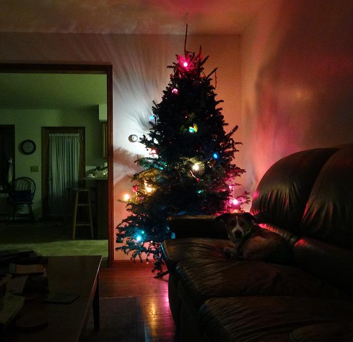 Christmas tree and dog