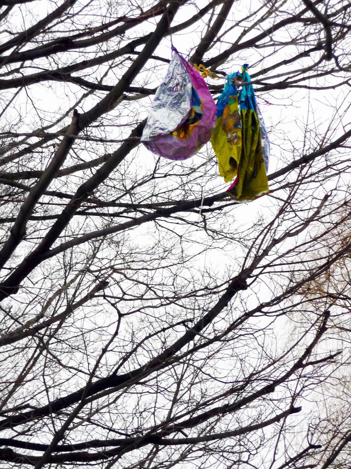 Balloons stuck in tree