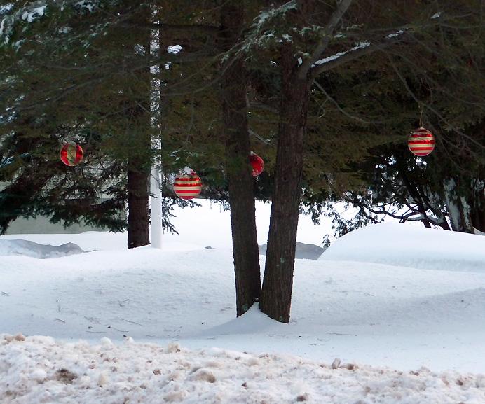 Christmas balls in hemlock tree