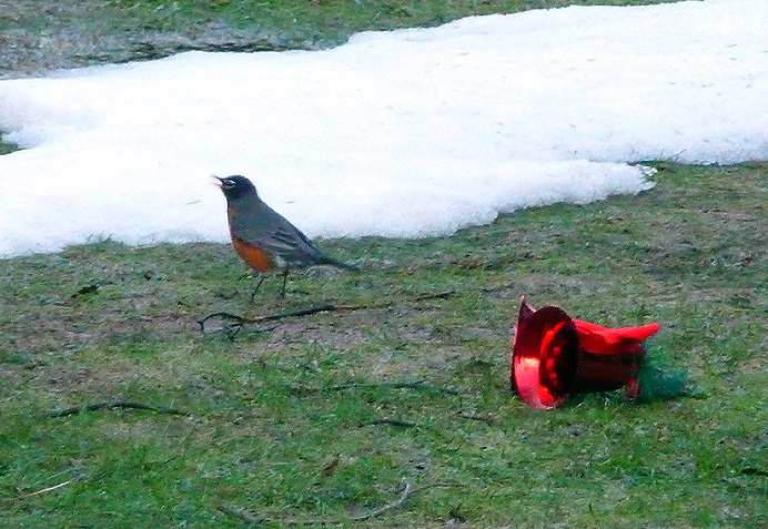 Robin with Christmas bell