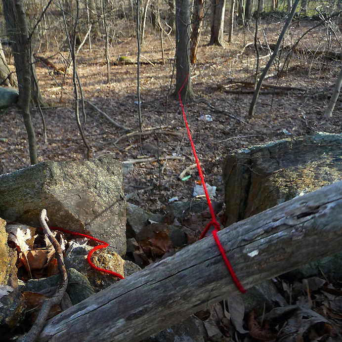 Red string in woods