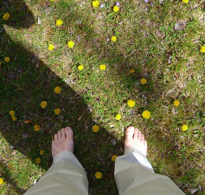 Barefoot in dandelionss