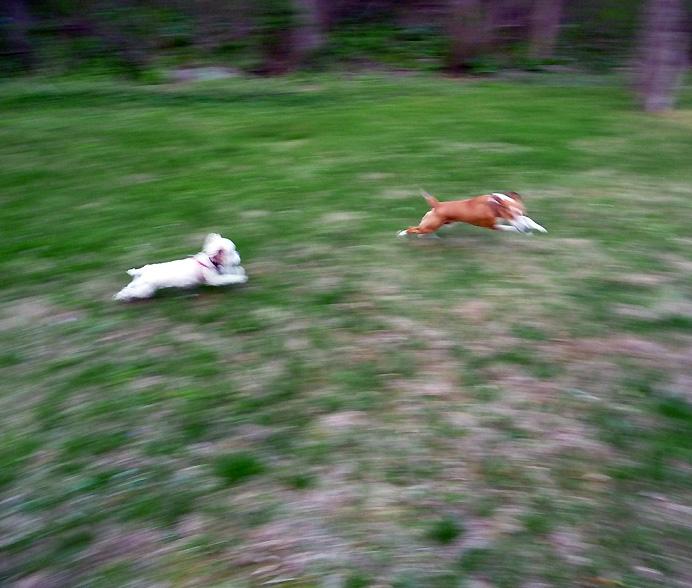Dog chasing dog