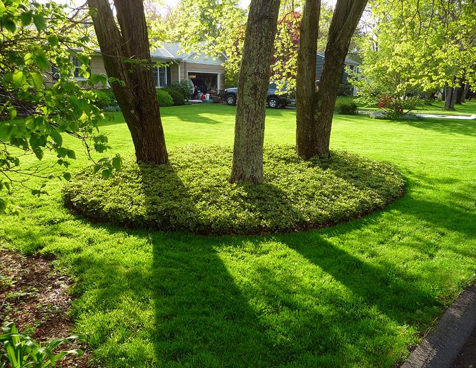 Near-perfect lawn