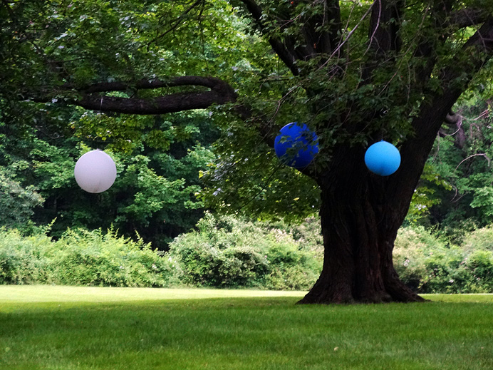 Balloons hung from a tree