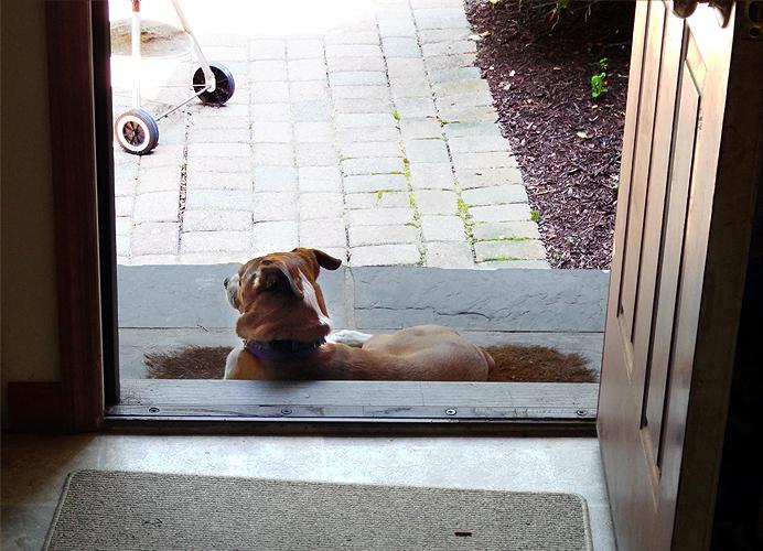 Dog lying in doorway