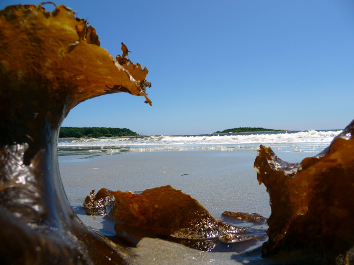 Ocean surf framed by seaweed