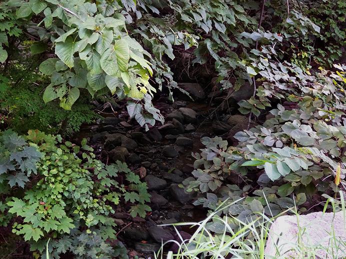 Dry brook