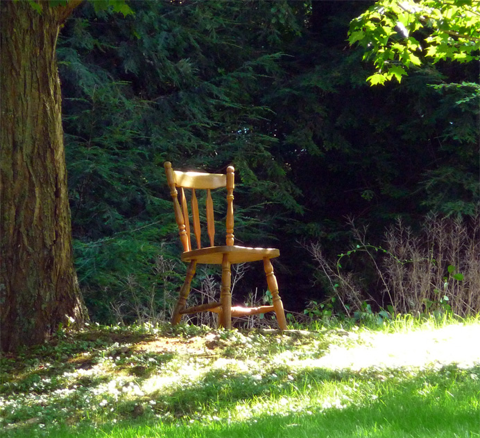 Dining chair under tree