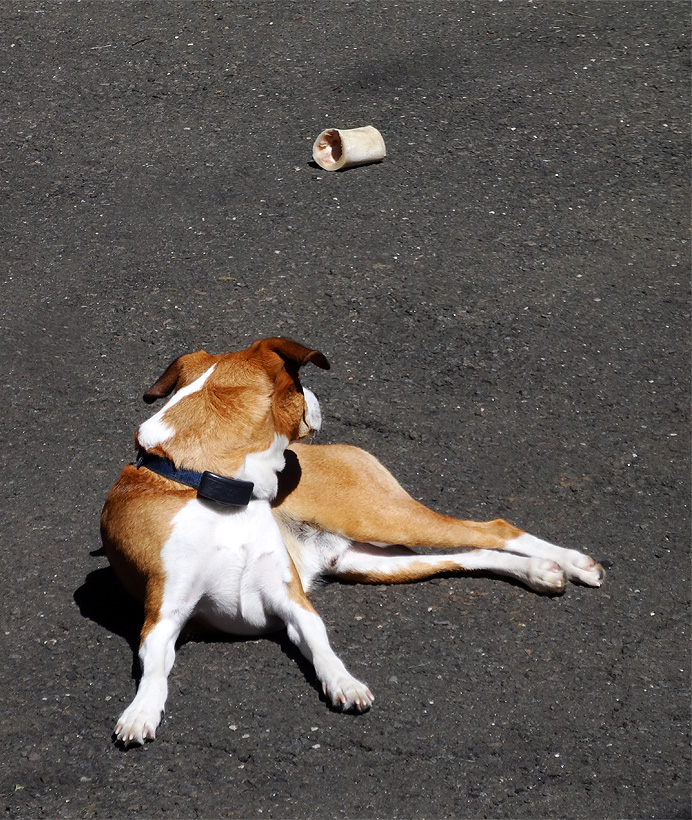 Dog basking next to bone