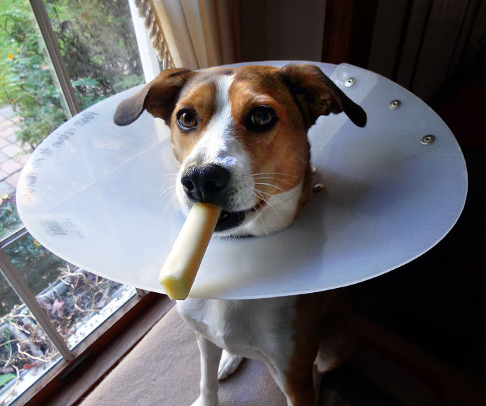 Dog with cone and cheese
