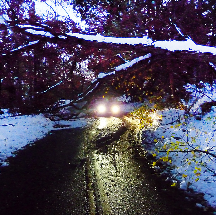 Car driving under fallen tree