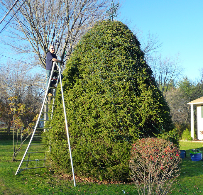 Man trimming giant Christmas tree