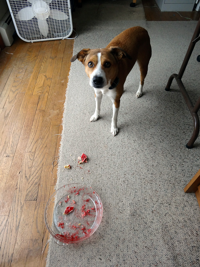 Dog eating cherry pie
